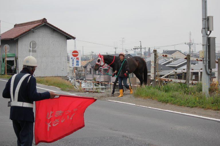 笠松競馬場馬が道路を横切る