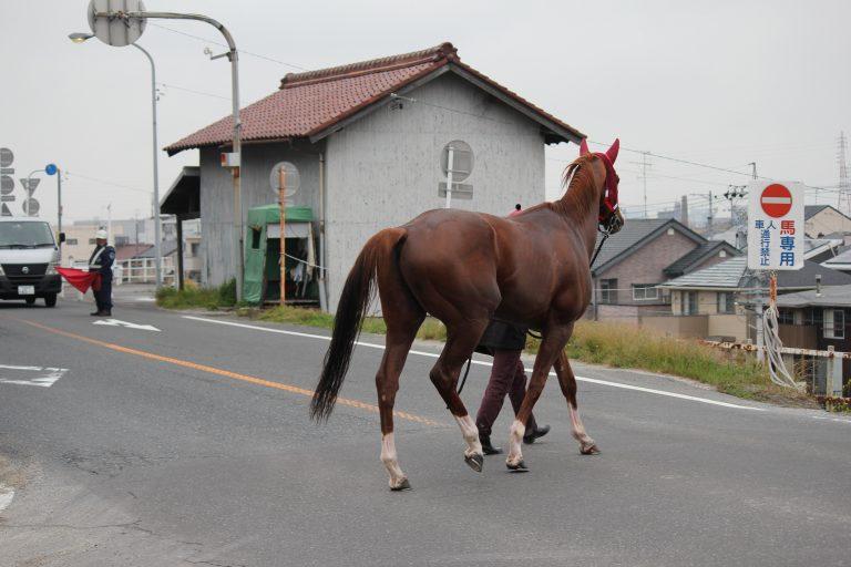 馬が道路を横切る